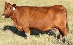 426 COW