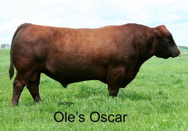 RA-OLES-OSCAR