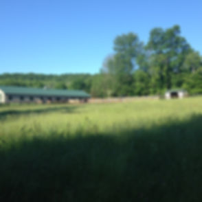 Farm-back field to barn.jpg