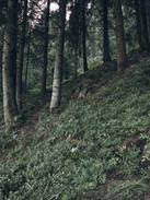 Fille randonnée dans la nature