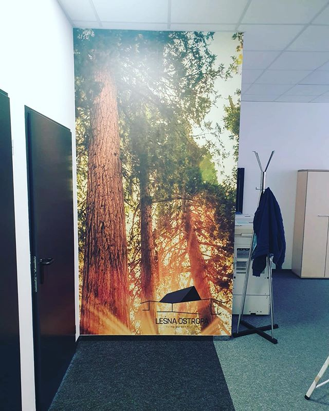 #fotowall #forest #las #fototapeta #foli