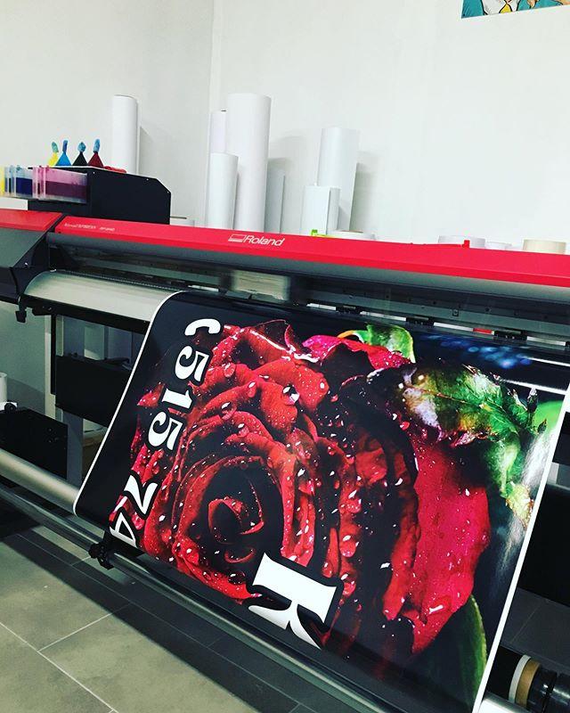 #rose #róża #drukarnia #jakośćpierwszakl