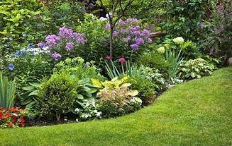 Perennial Garden2.jpg