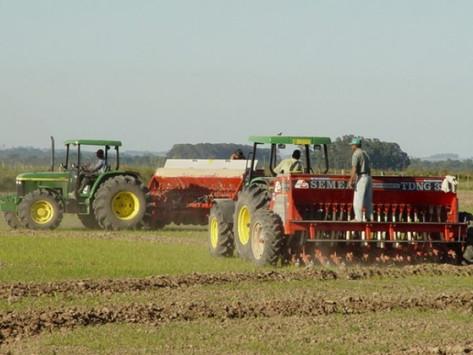 Semeadura de arroz alcança 36% e plantio de milho chega a 65% no RS