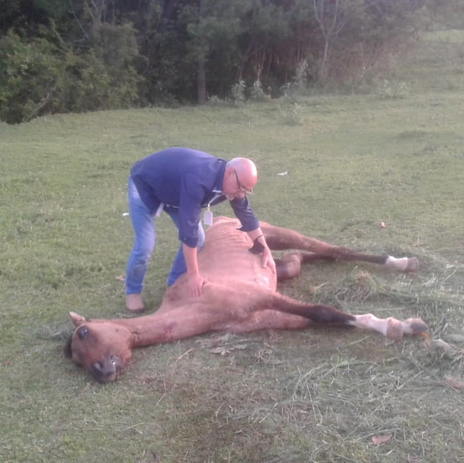 Cempra socorre cavalo agonizando e com a pata quebrada no Bairro Universitário