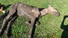 ONG S.O.S Animais e Cempra resgatam cavalo abandonado no Bairro Vila Nova