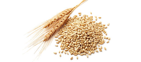 Groin seed, wheat, boulias, molasses, lucerne meal, sunflower meal, animal feed