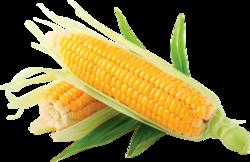 Corn, boulias, animal feed, molasses, products, market , trade, wholesale