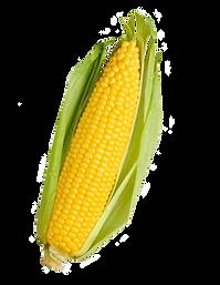 Corn, Boulias Animal Feed, Molasses, corn, wholesale, market trade