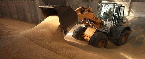 molasses, animal feed, boulias, company, market, trade, wholesale