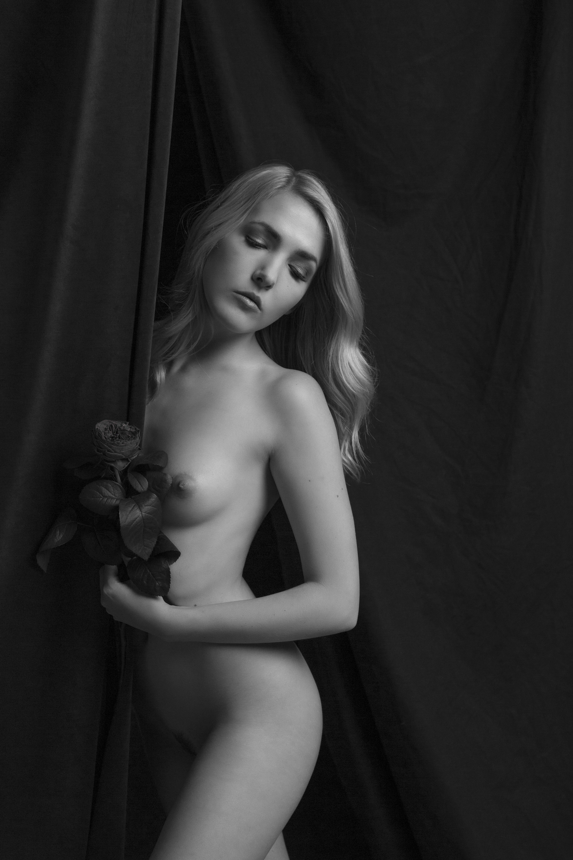 Wild Rose (ii)