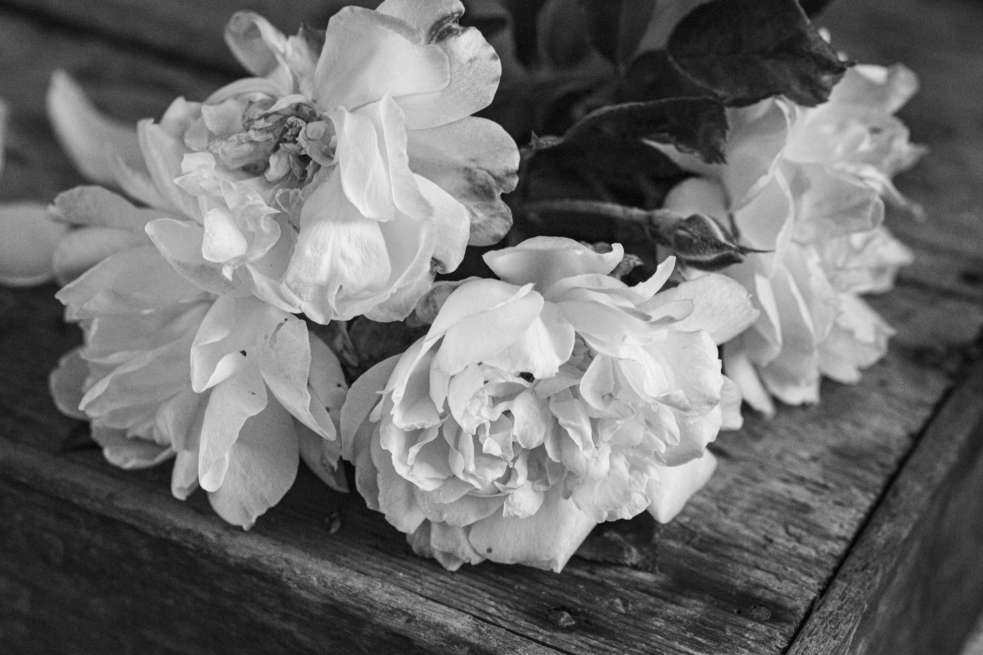Roses from Mum's Garden iii