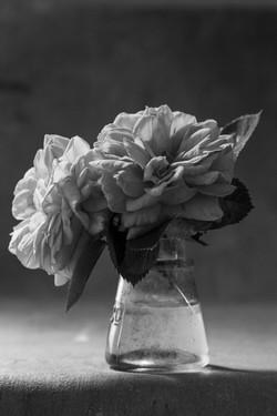 Roses from Mum's Garden i