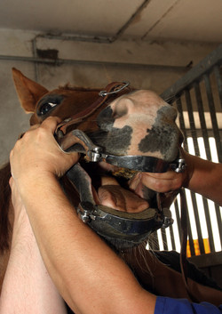 Yorkshire Equine Practice