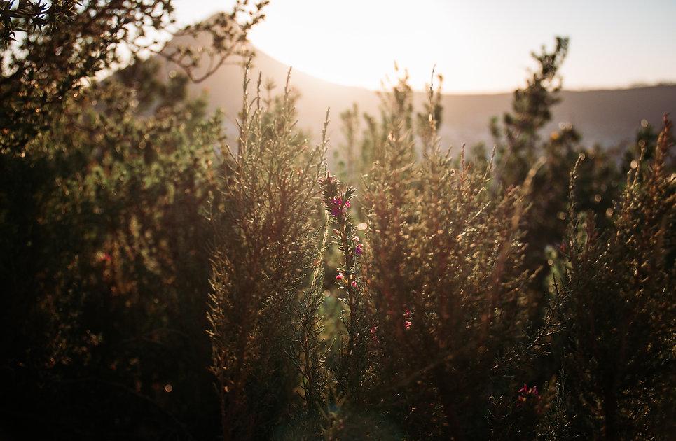benjamin-le-roux-fynbos-background-theha