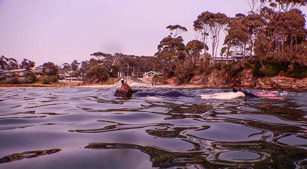 Mosquito Bay.jpg
