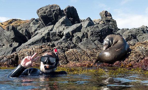 Montague Seal snorkel.jpg