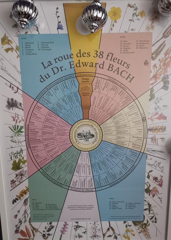 La roue des 38 Fleurs de Bach