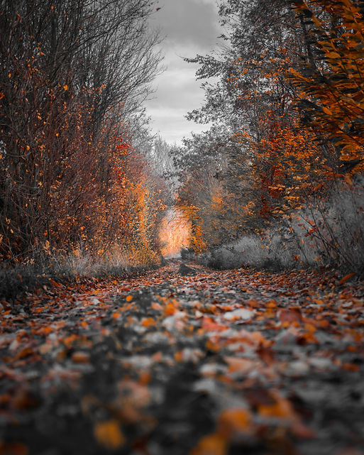 photography-of-fall-trees-1591447.jpg