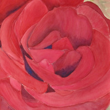 How Red is a Red Rose.jpg