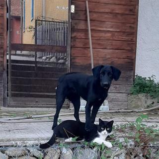 Tessa e Otto