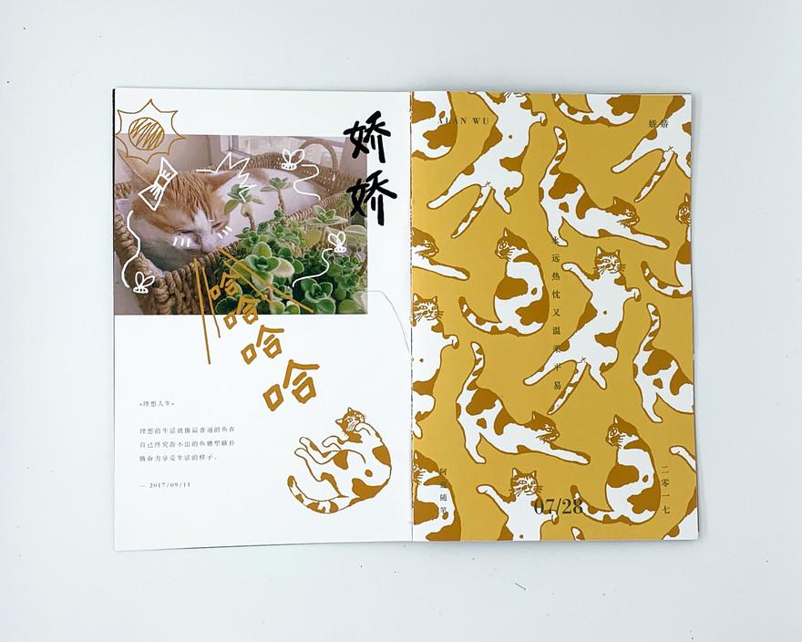 Cat - JiaoJiao