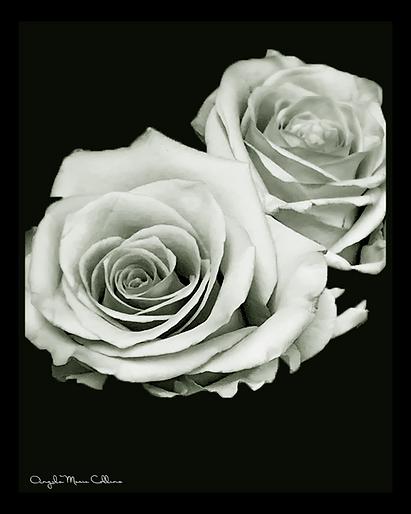Rose of Sharon Print