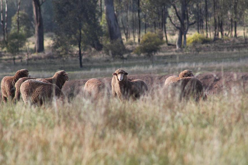 sheep farm accommodaton farmstay
