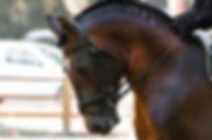 horse-1966517_1920.jpg