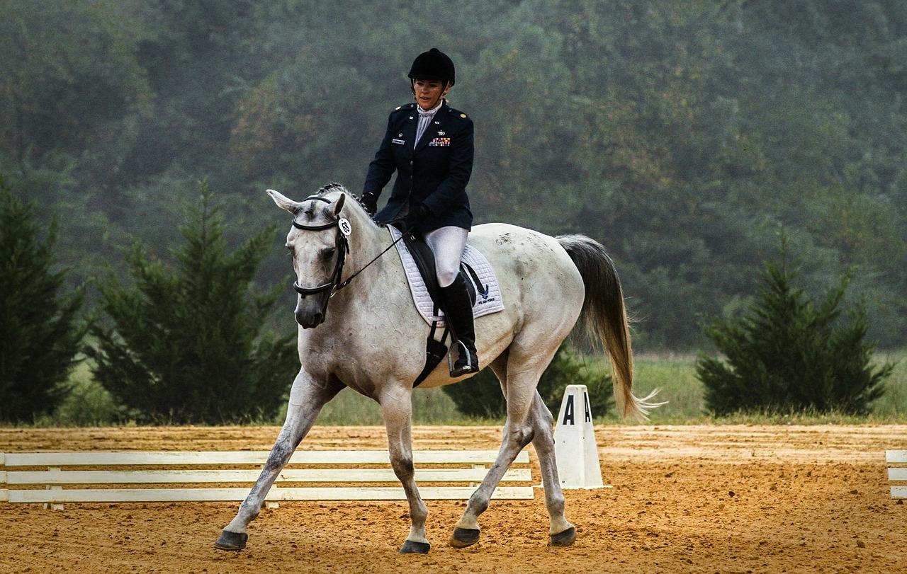 DR-horse-573770_1280