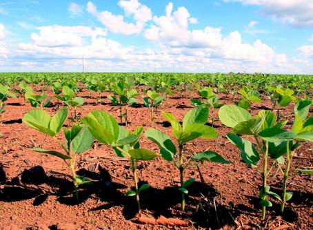 Plantio da soja avança bem em São Gabriel do Oeste e produtores esperam boas produtividades