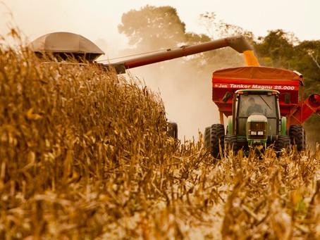 MS aumenta em quase 60% a área ocupada pela agricultura