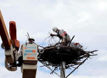 """Após ter ninho destruído pelo fogo, Tuiuiú ganha nova """"casa"""" com estrutura metálica"""