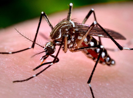 São Gabriel do Oeste chega a 1.016 casos notificados de dengue no ano