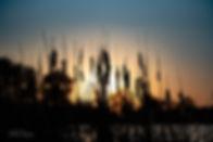 sunset in the swamp.jpg