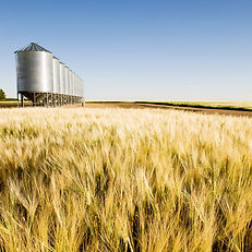 grain-bins-barley-by a barley field.jpg