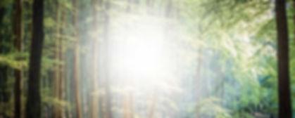 Wood_image (kopia).jpg