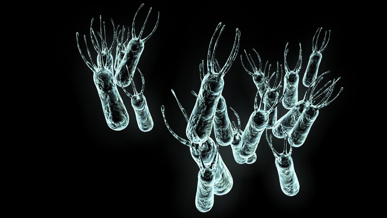 bacterie-B-full_L.jpg