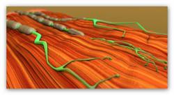 Fibrille-Synapse.jpg