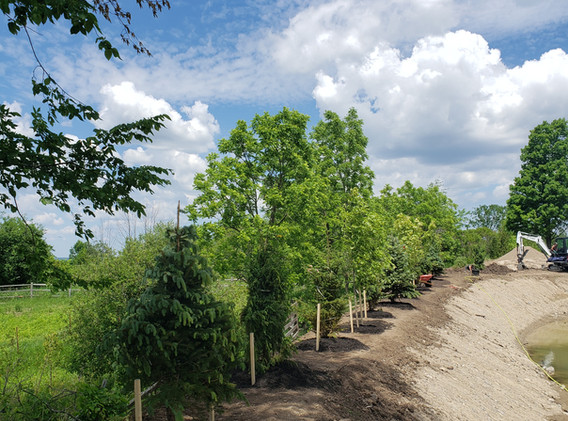 Planted Trees