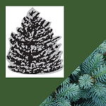 TREES (1).png