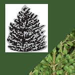 TREES (3).png