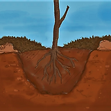 Planted tree with mulch around it