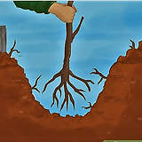 Tree roots in dug hole