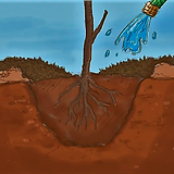 Planted tree being watered