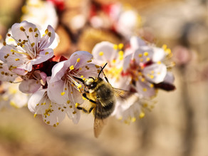How Does Fruit Tree Pollination Work?