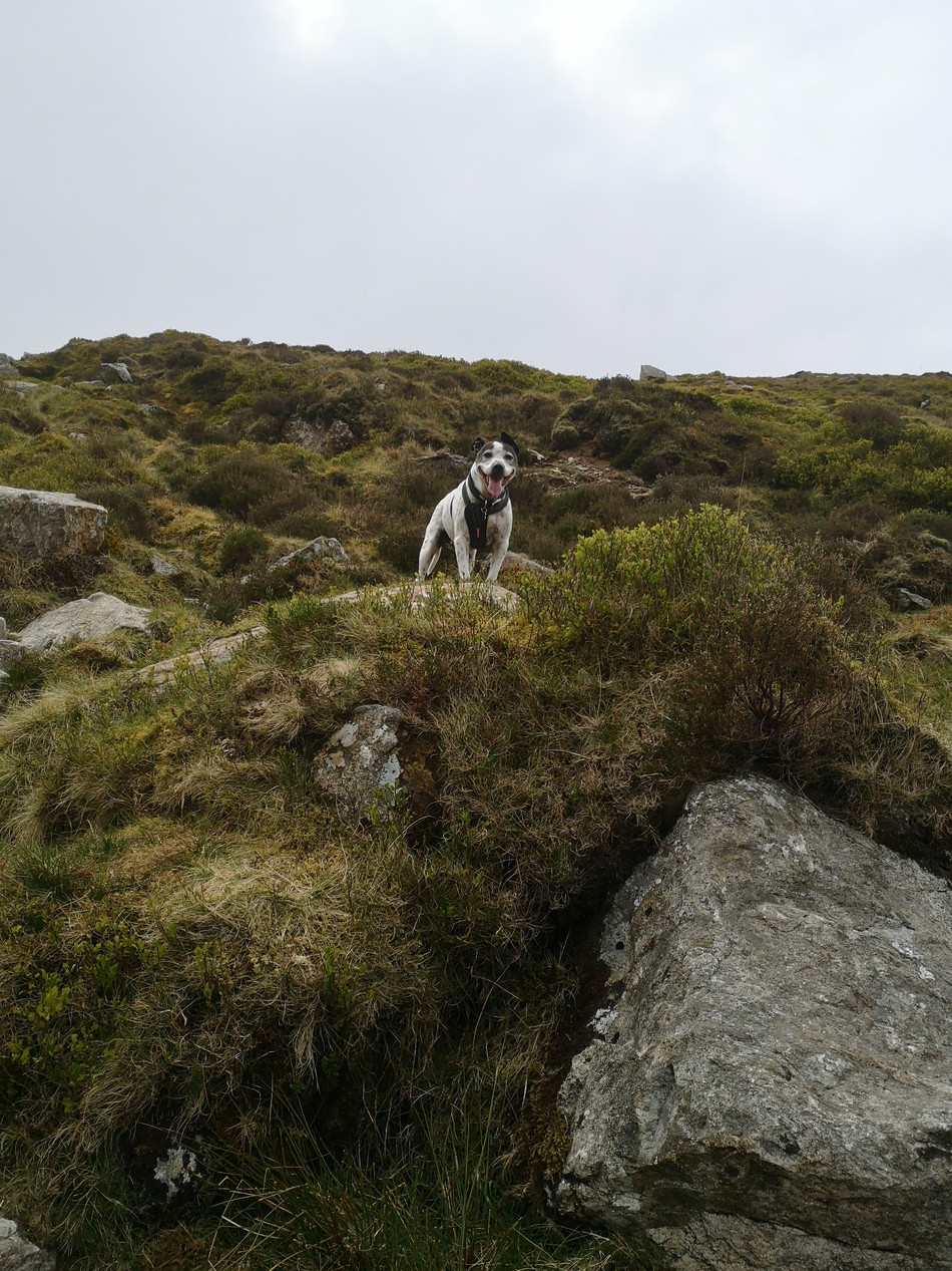 Bob the mountain dog...