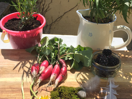 16 Amazing Plants for a Sensory Garden