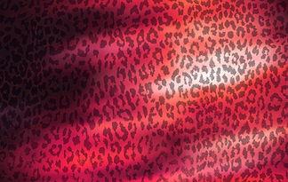 Leopard%20Transparent_edited.jpg