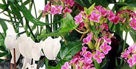 Designer Choice Plant Basket - Large
